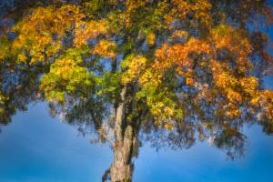 Belper River Gardens - Reflections 004